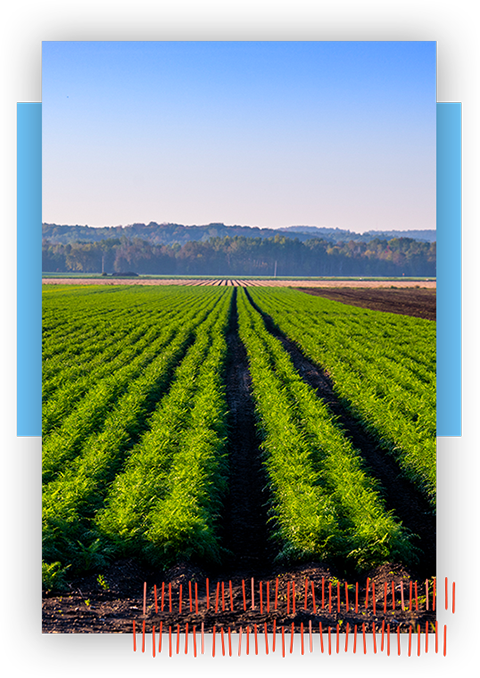 Image of Innisfil Field